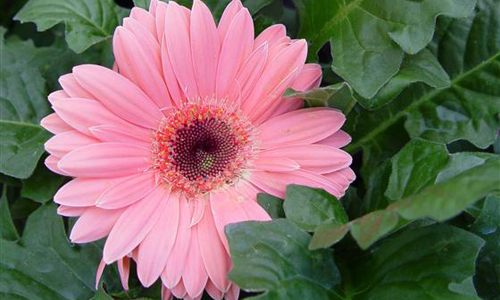 Images Of Indian Flowers And Their Names Roselawnlutheran